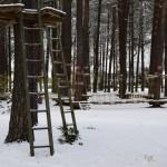 Žiema parke